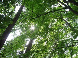 高尾山の木漏れ日