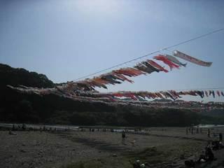 相模川こいのぼり2009