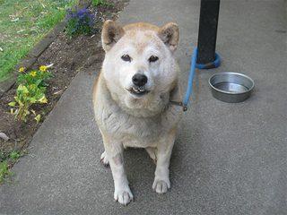 うちの犬1