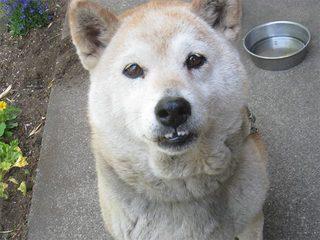うちの犬2