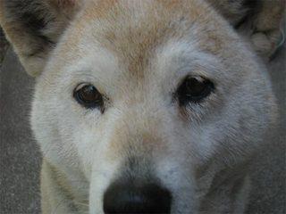 うちの犬3